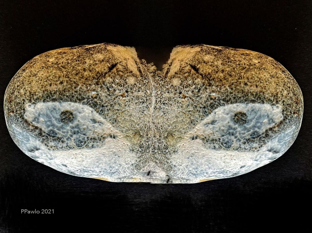 Steinzeiten D1 c 2021